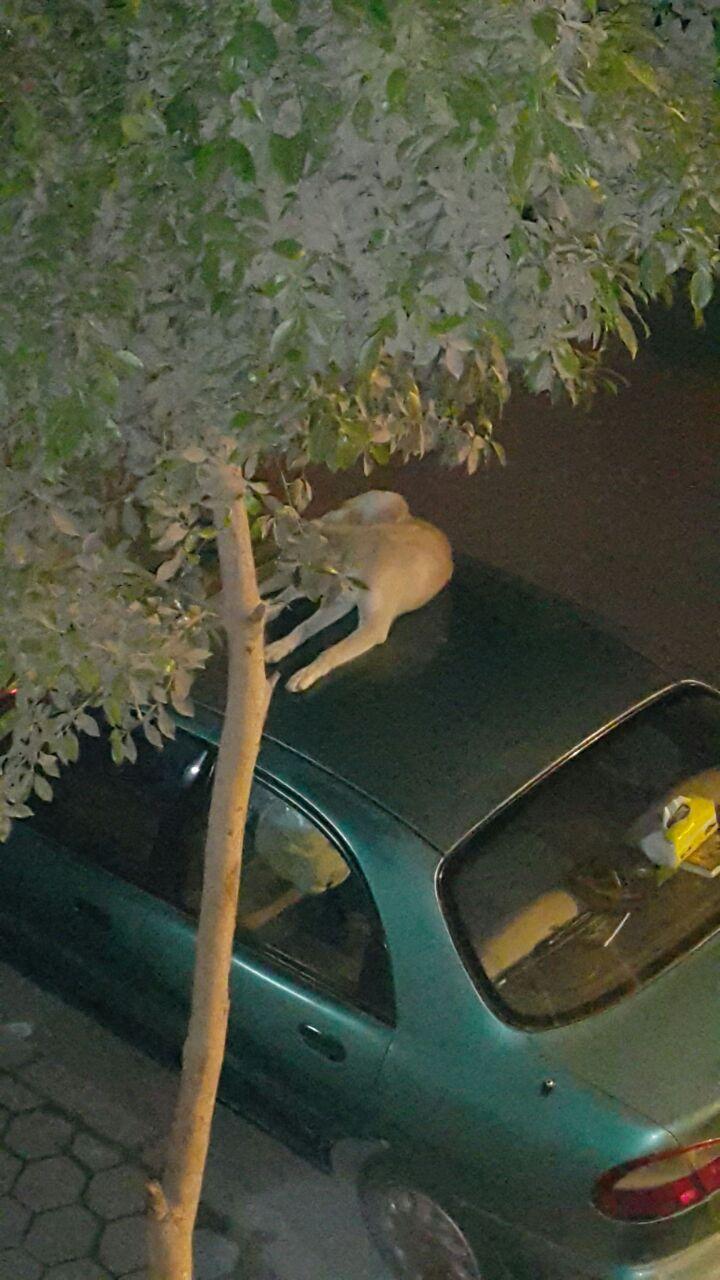 صورة آخرى توضح انتشار الكلاب الضالة