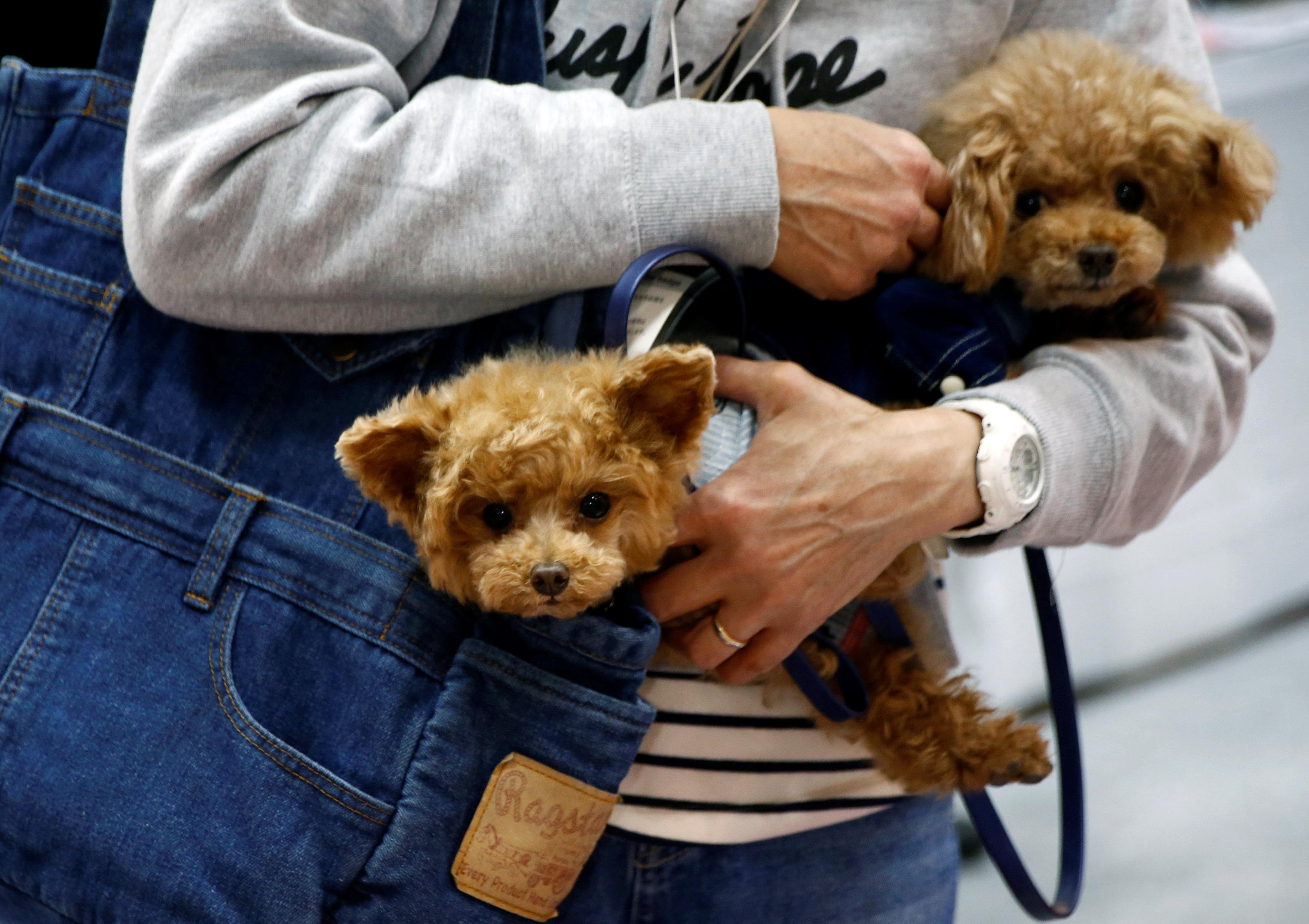 انطلاق المعرض الدولى لترفيه الكلاب فى اليابان