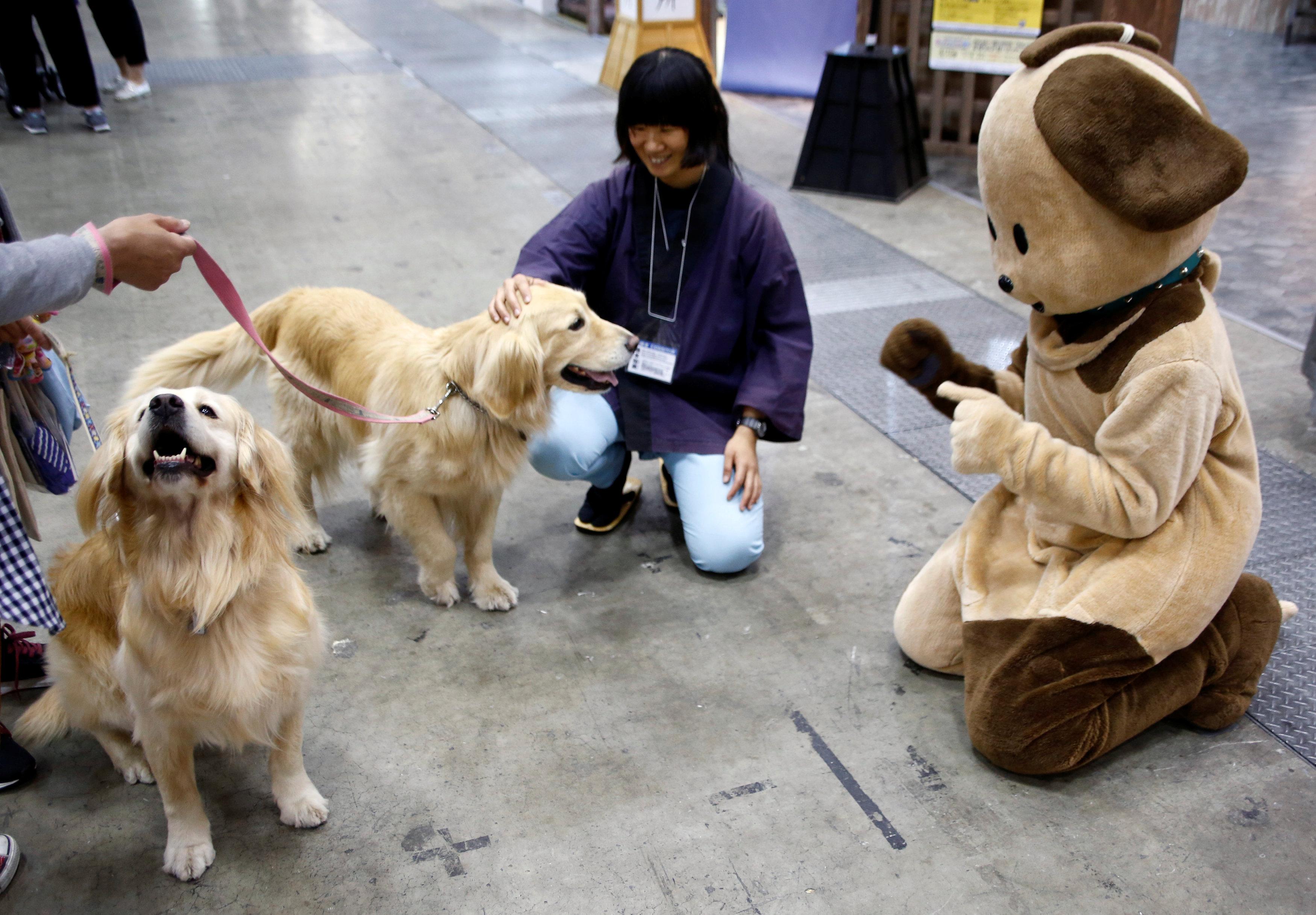 معرض الترفيه عن الكلاب