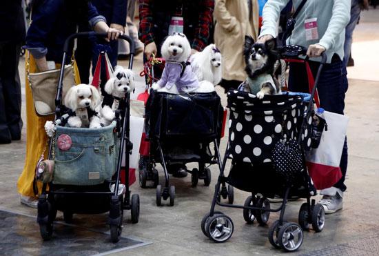انطلاق المعرض الدولى للترفيه عن الكلاب فى اليابان