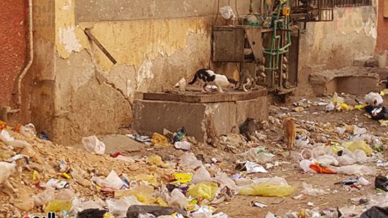 القطط تكشف فى القمامة