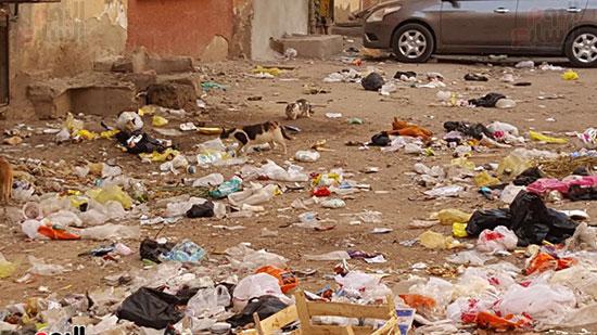 أعداد من القطط بالقمامة
