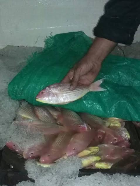 ارتفاع أسعار السمك