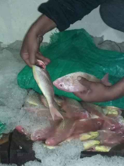 فساد الأسماك لدى التجار