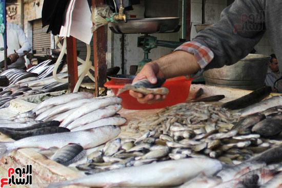 أسماك الشبار والبوري يرتفع سعرها  خلال شهور الربيع ل  توقيتات الصيد