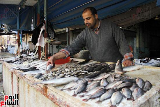ارتفع سعر أسماك الشبار من 15 جنيها إلي 35 جنيها و60 جنيها للجوابي .