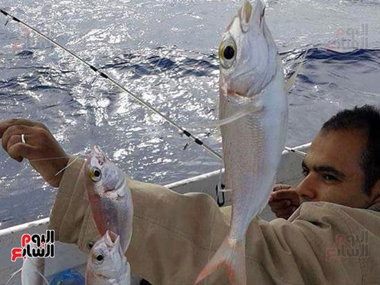صياد يعرض حصاد السنار  بمركب  صيد  بالإسكندرية