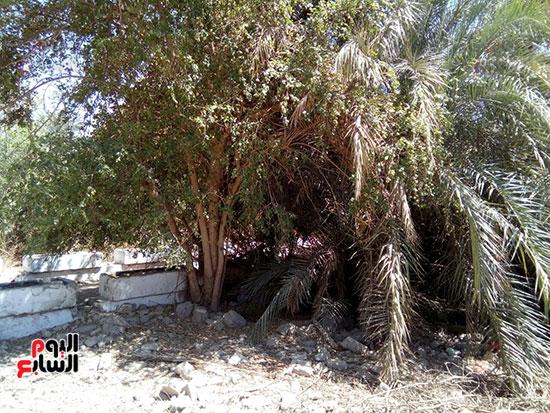 اشجار وحشائش فى المقر القديم