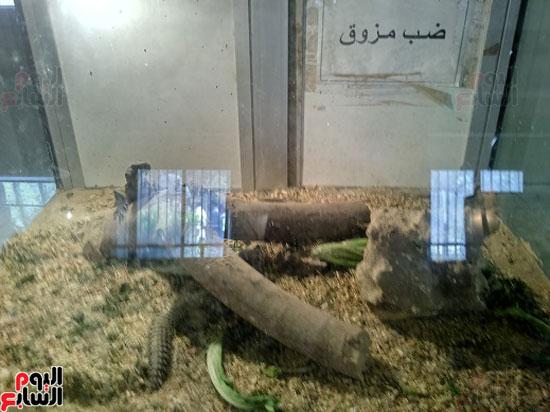 حديقة-الحيوان-بالفيوم-1-(4)