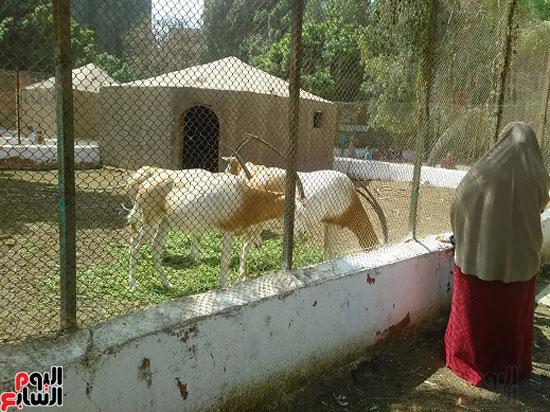 حديقة-الحيوان-بالفيوم-1-(22)