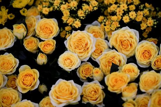 بعض أنواع الزهور