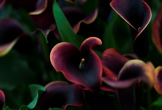 إحدى الزهور