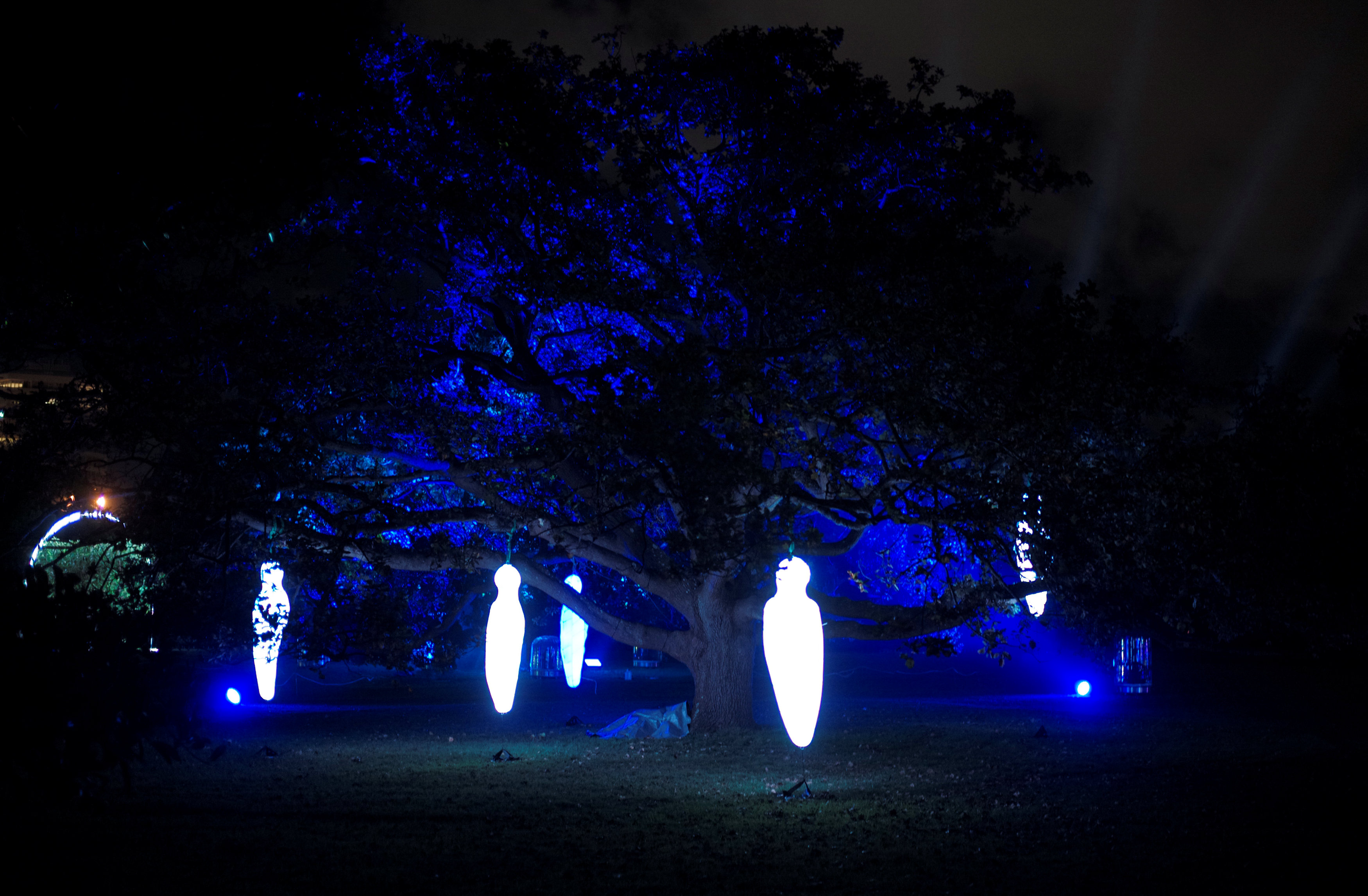 اضاءات خافتة فى قلب الأشجار بمهرجان سيدنى للضوء