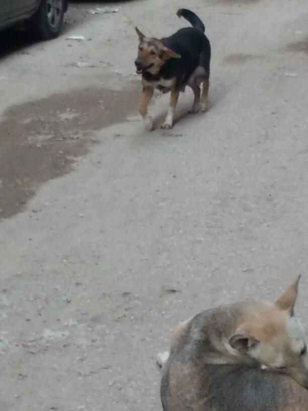 انتشار الكلاب فى شوارع عين شمس (1)