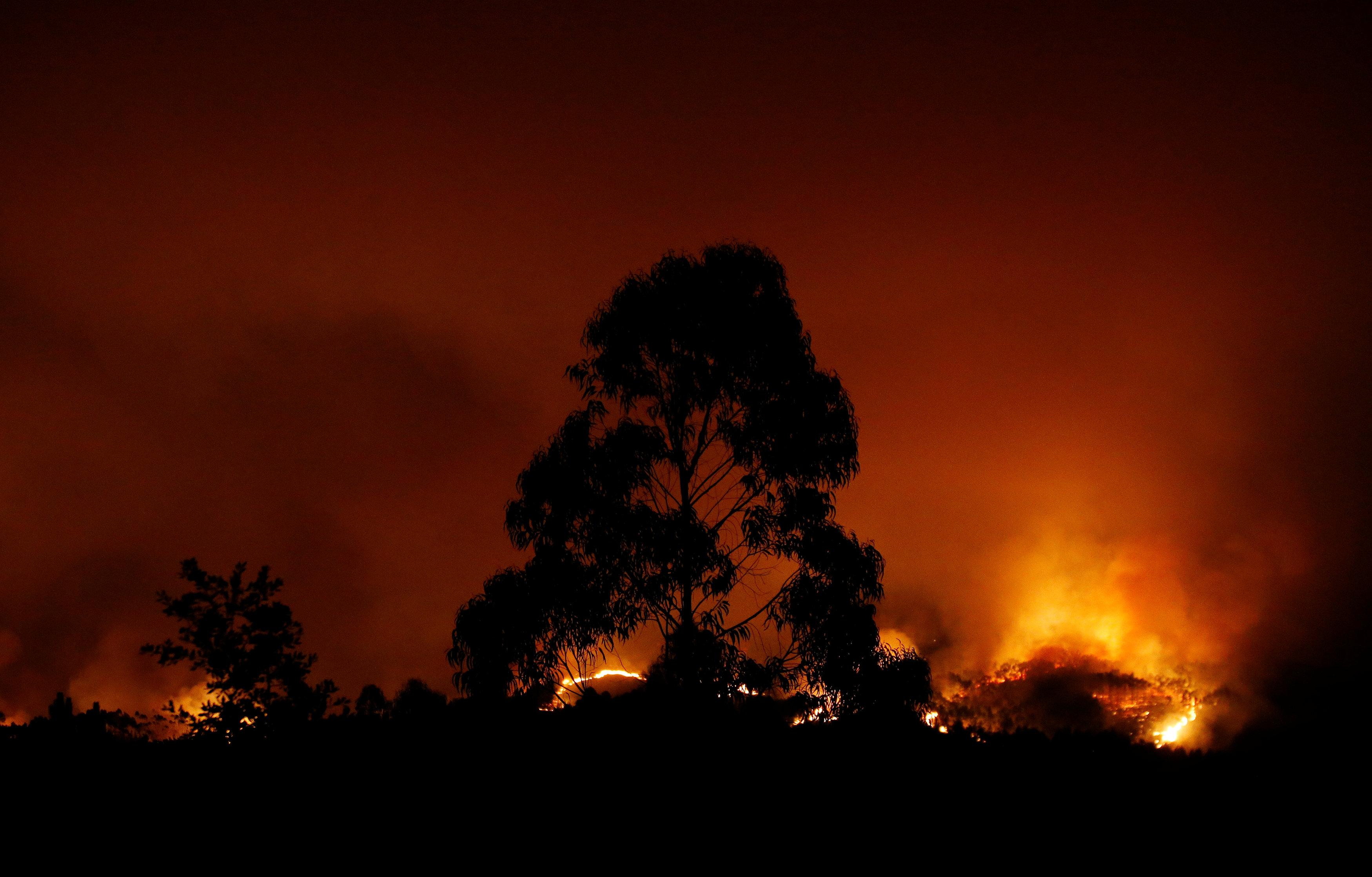 النيران تلتهم مئات الافدنة فى غابات البرتغال