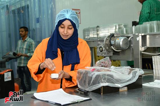 فتاة تعمل فى تغليف العنب لتصديره من الاقصر