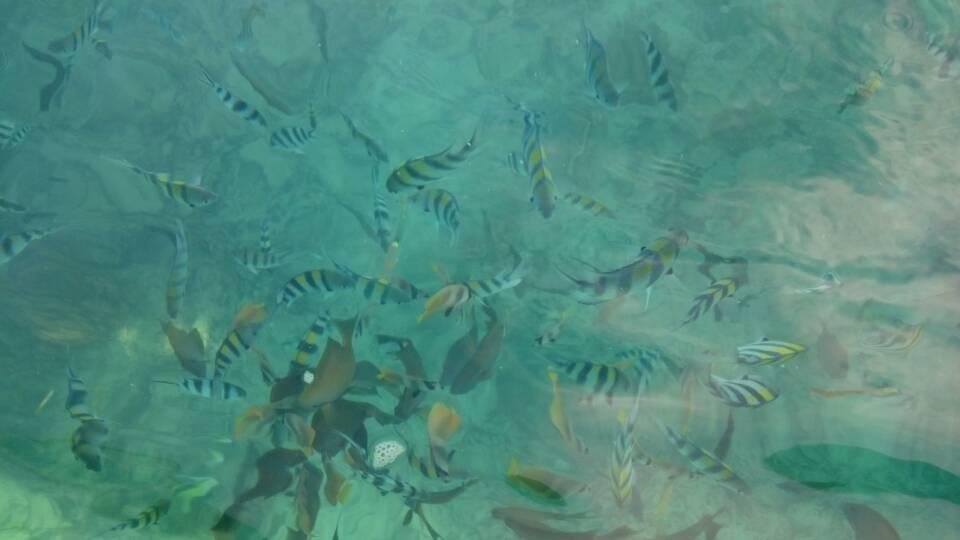 الأسماك فى المياه