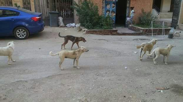 جانب من الكلاب فى حدائق الأهرام