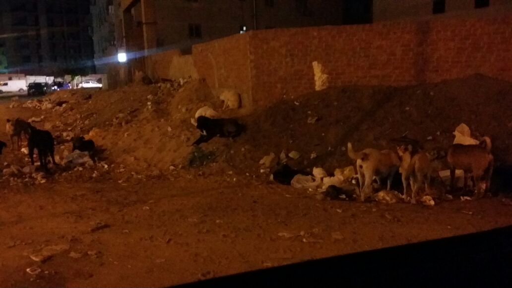 الكلاب الضالة فى مدينة نصر