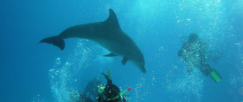 الدلافين
