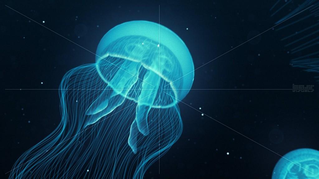 قناديل البحر الشفافة قد تسبب الوفاة