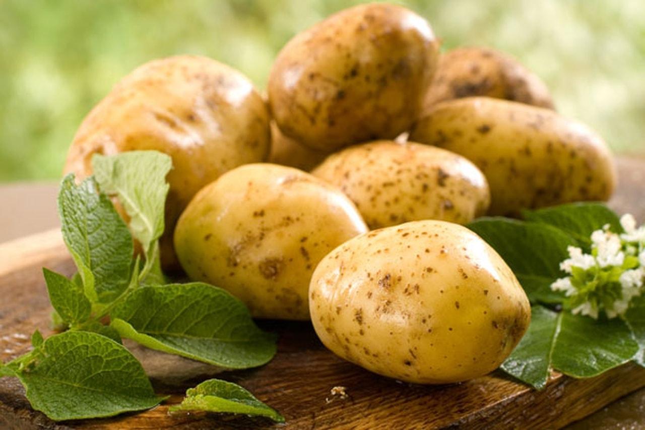 نتيجة بحث الصور عن البطاطس