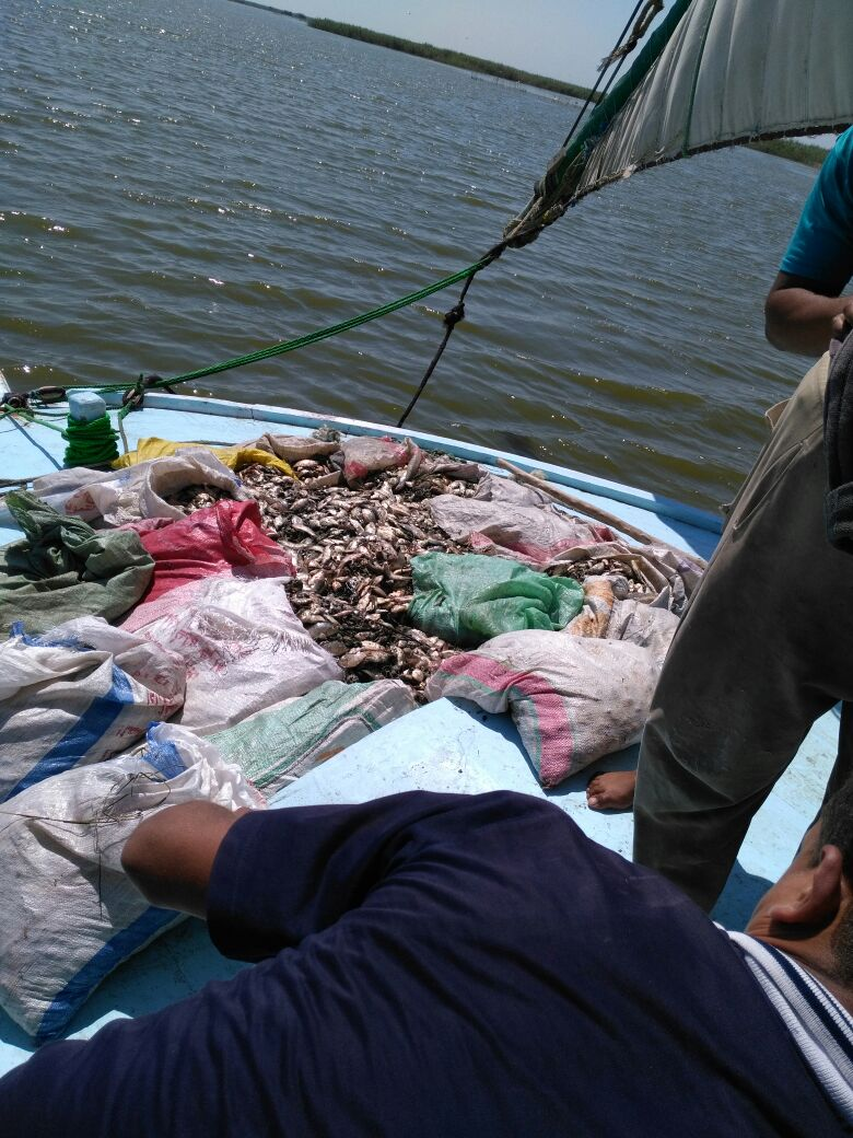 ضبط مخالفات نهر النيل