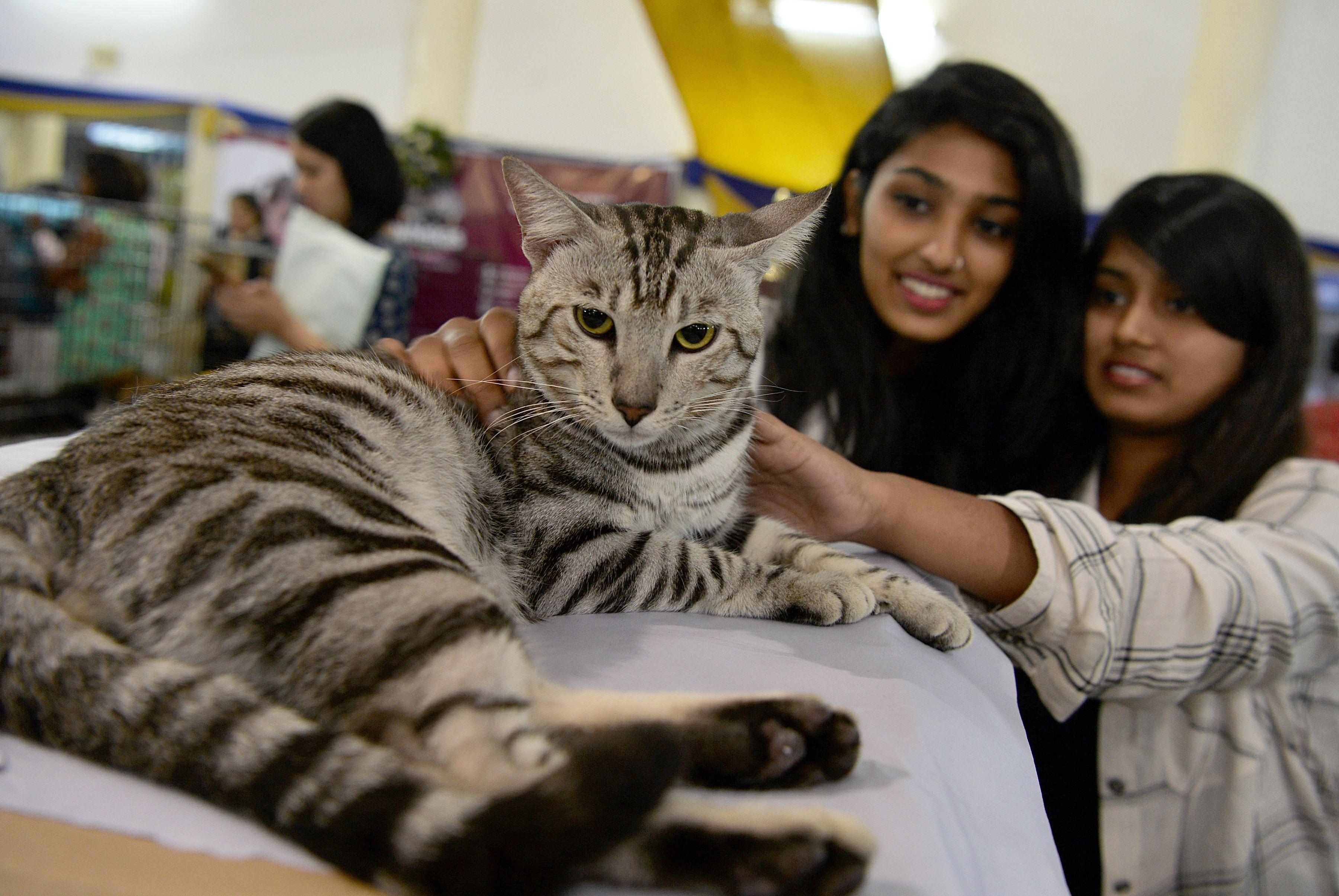 فتيات تداعبن قطة مشاركة فى المعرض الدولى بالهند