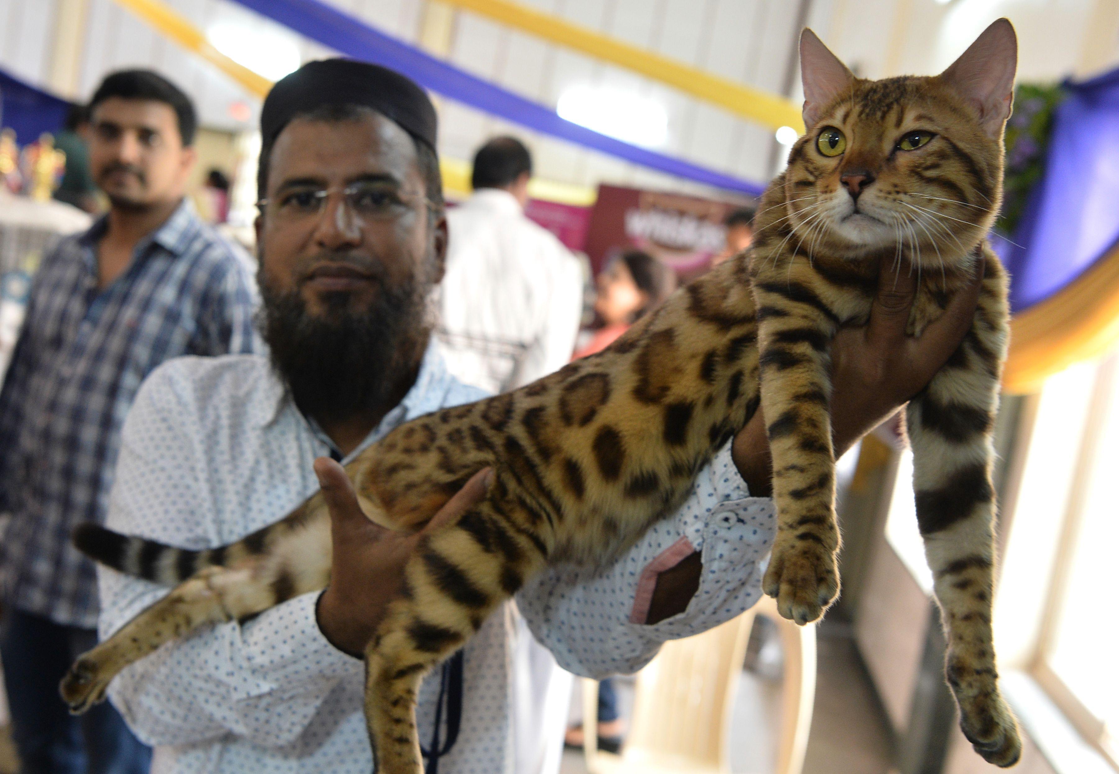 رجل يحمل قطته البنغالية خلال المعرض الدولى بالهند