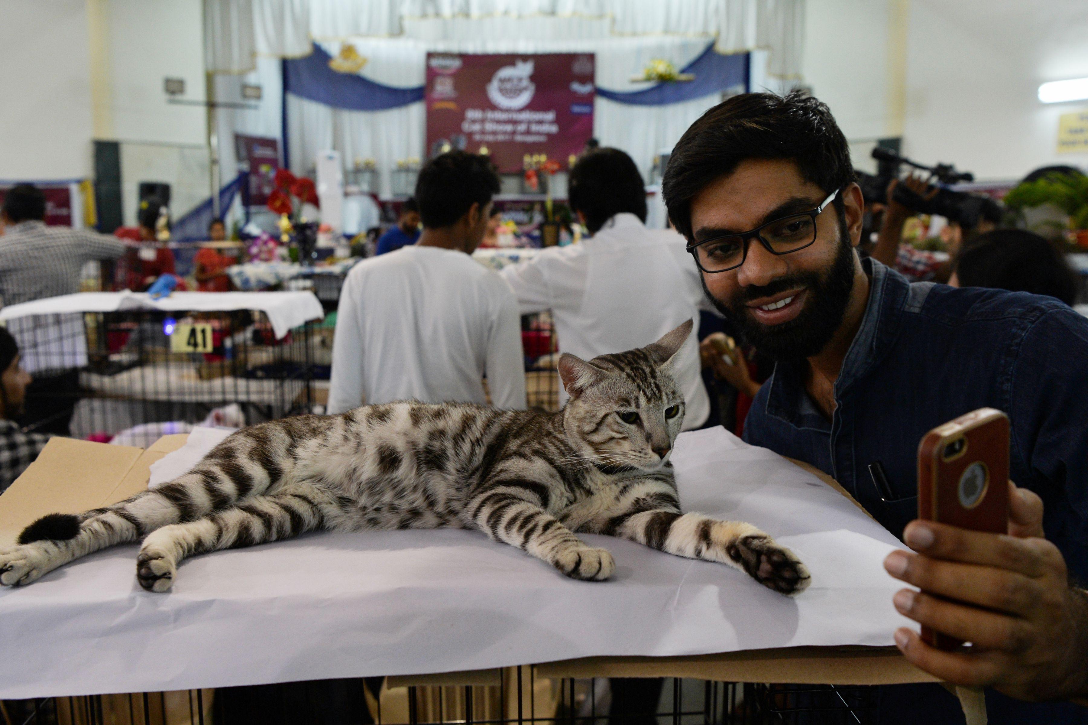 سيلفى مع القطط فى المعرض الدولى بالهند