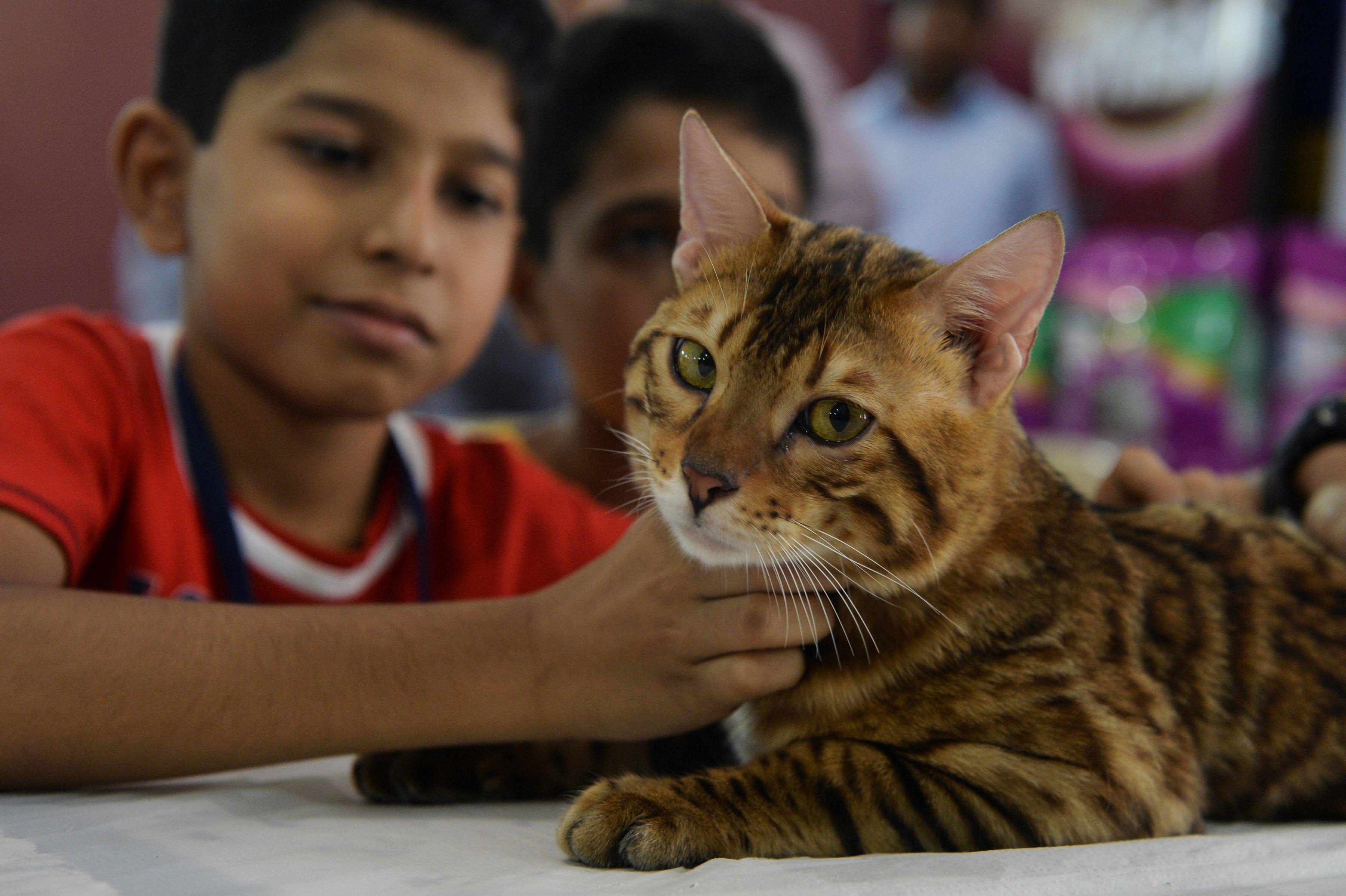 طفل يداعب قطة فى المعرض الدولى بالهند