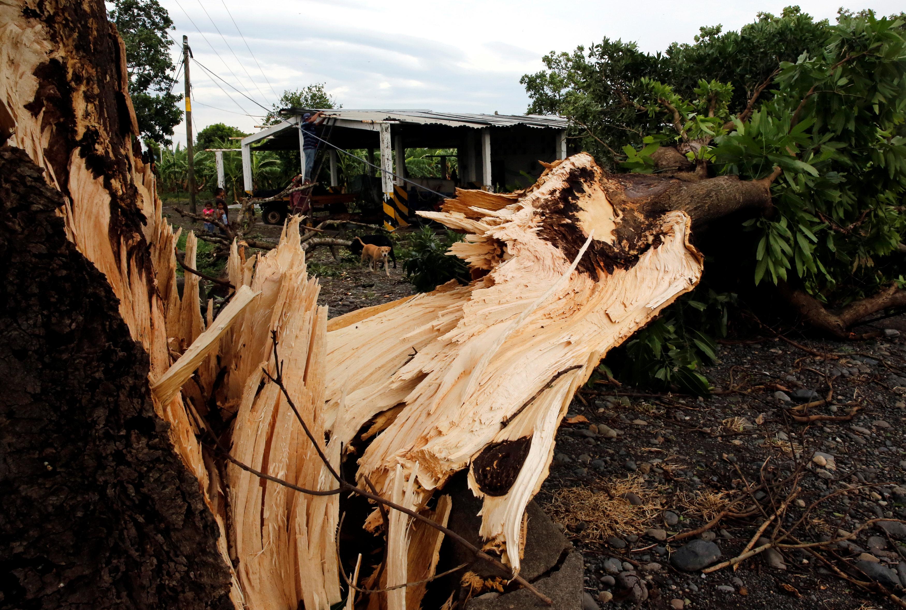 العاصفة تقتلع الأشجار