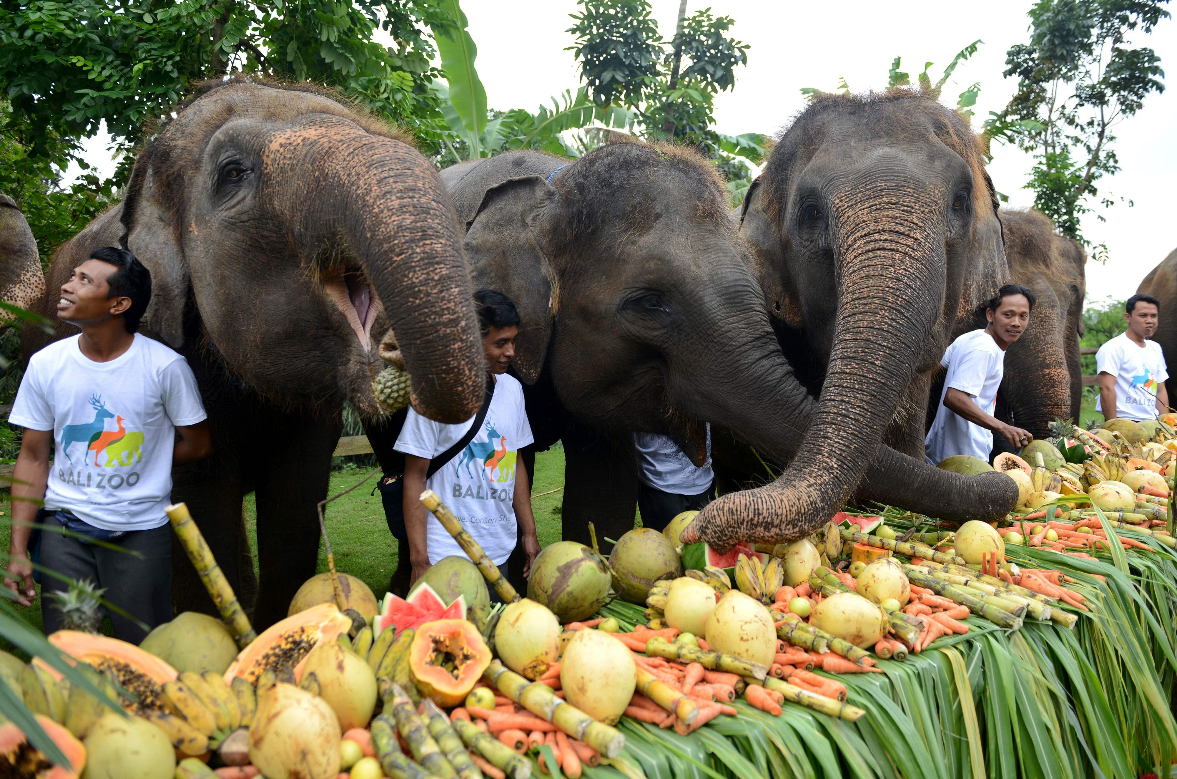 اندونيسيا تحتفل بيوم الفيل العالمى