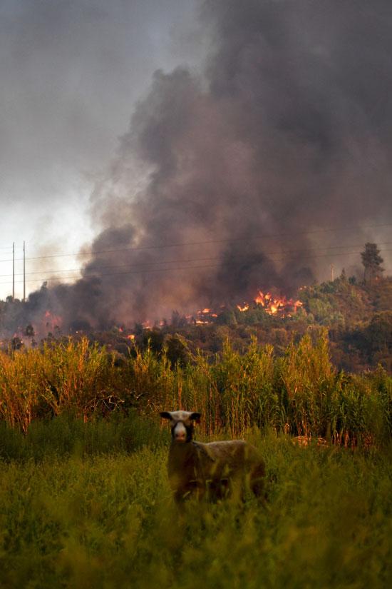 ارتفاع الأدخنة بشكل كبير نتيجة الحرائق الواسعة