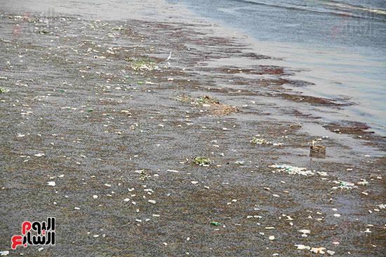 تلوث مياه النيل (15)