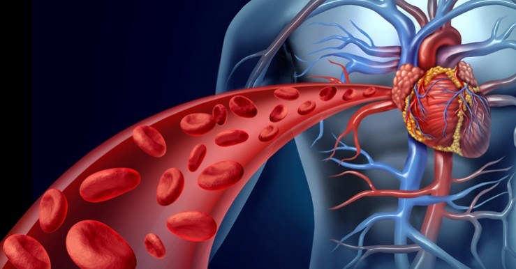 طرق-تحسين-الدورة-الدموية-وزيادة-نشاط-الدم-في-الجسم