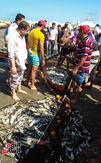 صيد سمك السردين ببورسعيد (35)