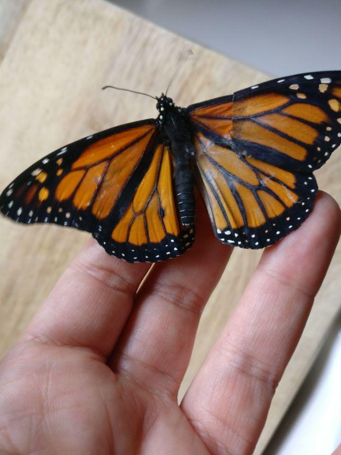 الفراشة بعد تركيب جناح جديد