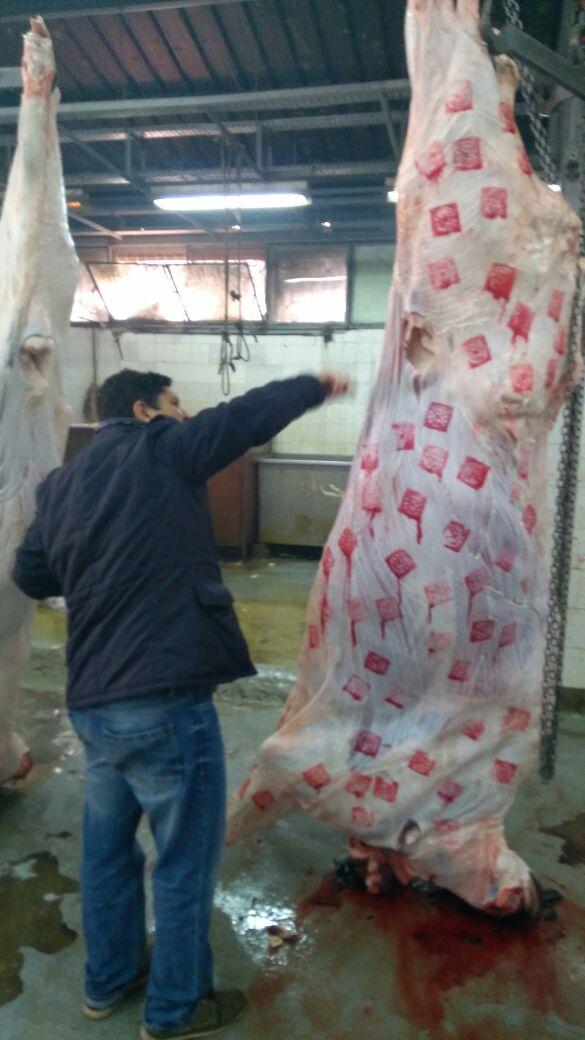 الختم المربع للحوم البلدية الكبيرة
