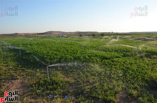 زراعة ورى أراضى جبال مدينة إسنا
