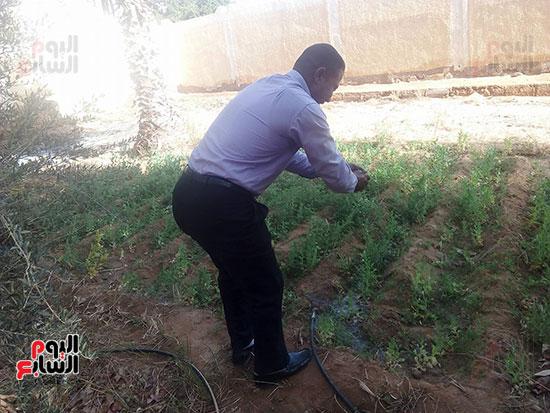 استكمال مبادرة زراعة النخيل