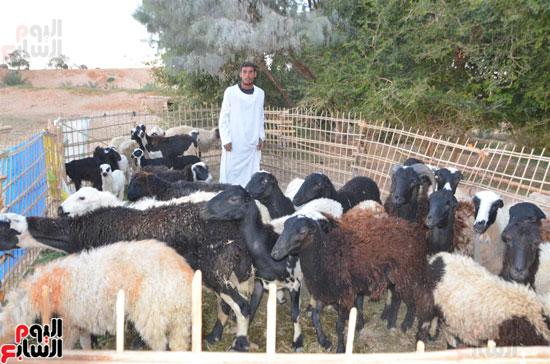 أهالى جبال القريا يناشدون الرئيس السيسى مساعدتهم بالموافقة على التقنين