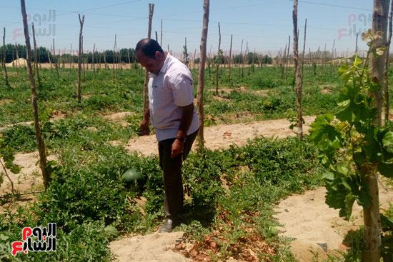 احدى الزارع بقرية الوادى