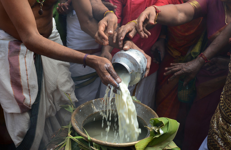 تقديم أرز بلبن للطبيعة فى مهرجان البونجال