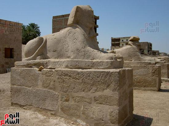 أحد الكباش التاريخية فى طريق الإله بين معبدى الأقصر والكرنك
