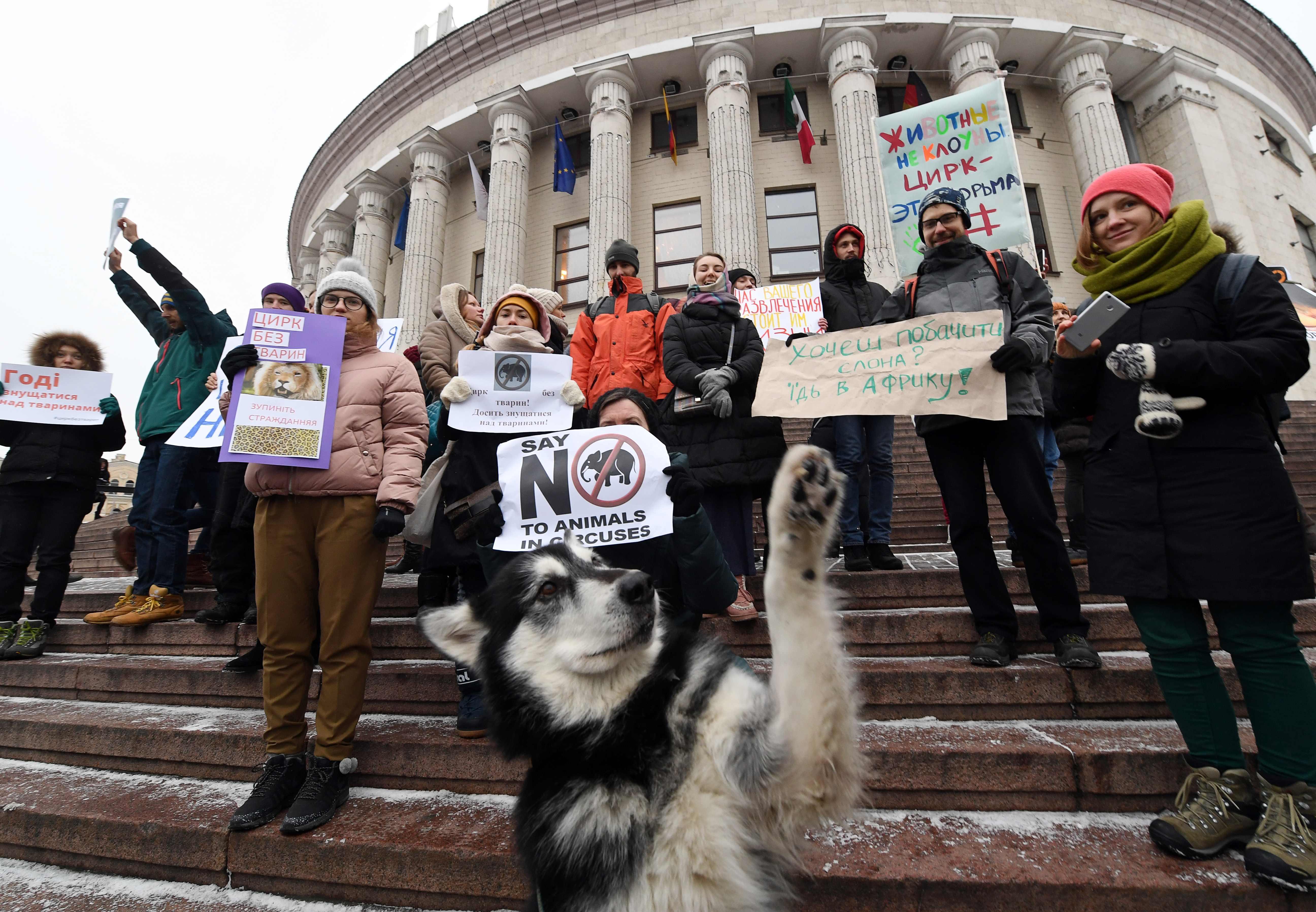 نشطاء منظمات حقوق الحيوان