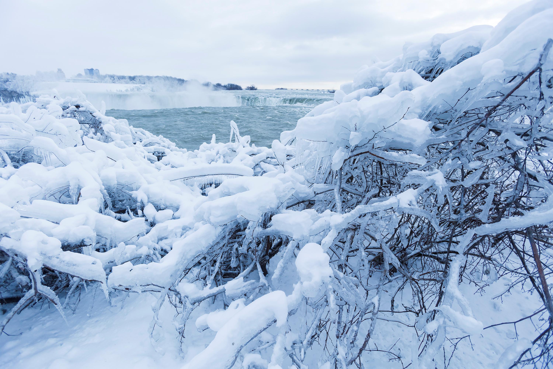 الثلوج فوق الأشجار