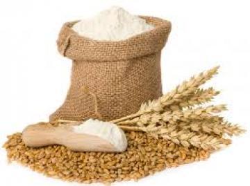 القمح السودانى