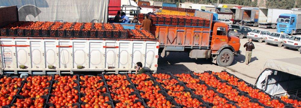الحكومة الإيرانية حاولت حظر تصدير الطماطم دون جدوى