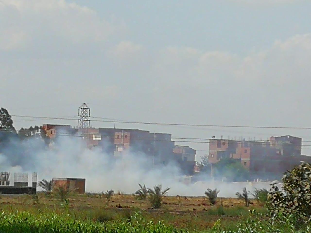 حرق قش الأرز فى الغربية  (2)